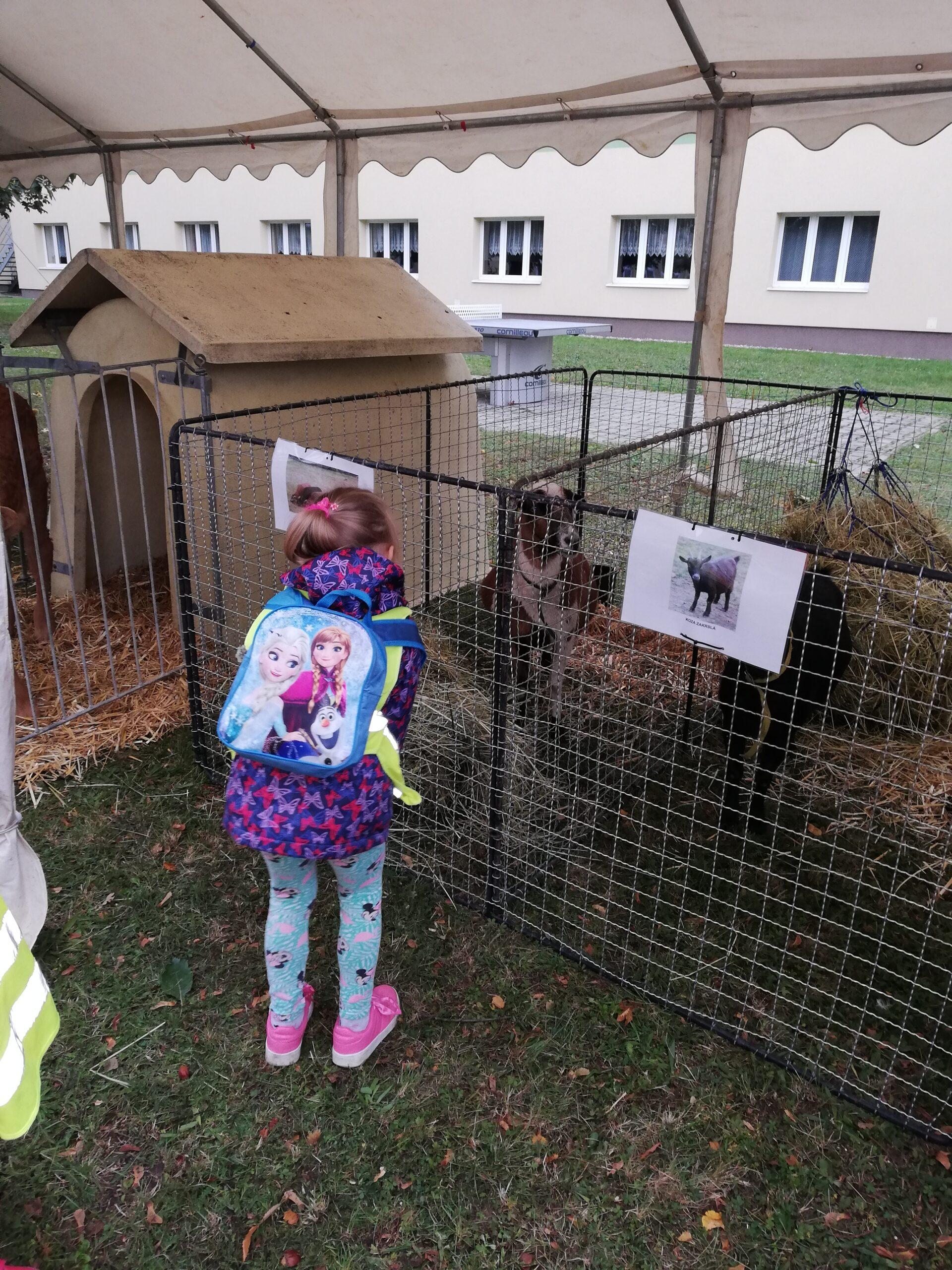 Výstava v Chrudimi